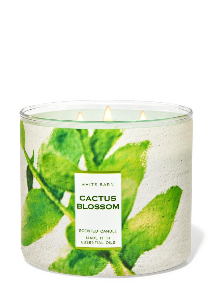 Cactus Blossom fragranza Candela a 3 stoppini
